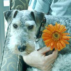 Mila in bloom