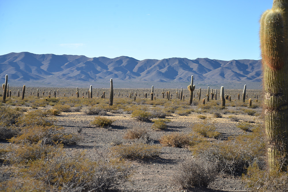 photo of cacti in landscape