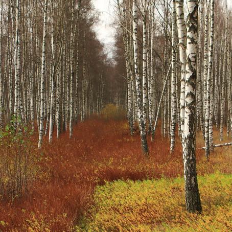 Ut på skogstur