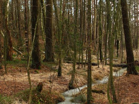 Skogspromenad vid Sisjön