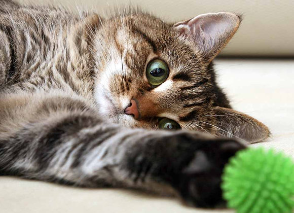 Cats/Domestics/Exotic pets (all non-dog pets) - Daily care visit