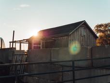Morning sun through chicken coop.