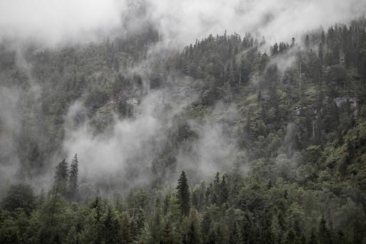 Wald im Nebel Fotograf Landschaftsbilder