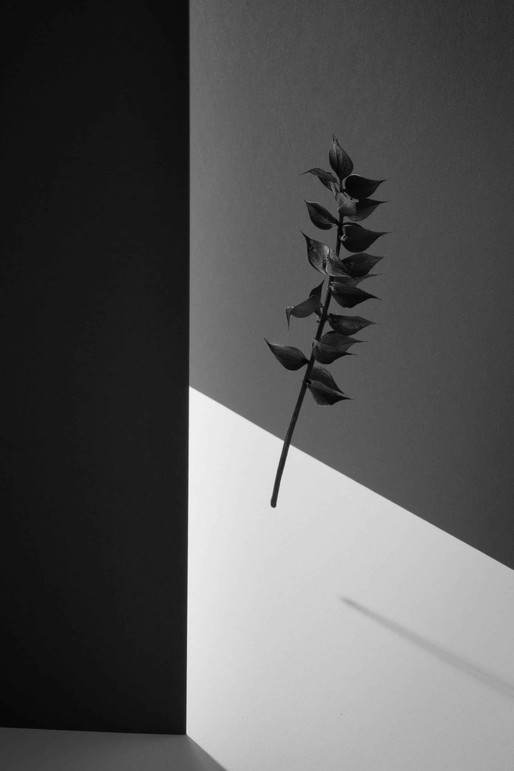 Schwarz weiss Blume Stillleben