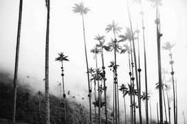 Wald schwarz weiss Fotoproduktion Mood Storytelling