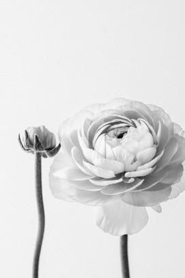 Blumen Still Life Fotografie