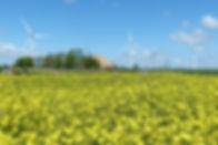 pb826_Pixabay_oilseed-rape-1426559_640.j