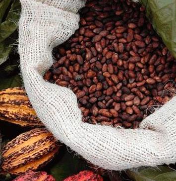 Dimagrire con il cioccolato | ISHI choco terapy | Fitline Dimagrimento Bassano