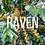 Thumbnail: Raven