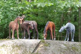 Herd Watching (group photo)