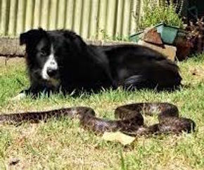 snake avoidance copy.jpg