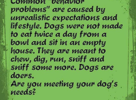 Dogs are Doers