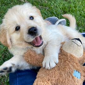 Puppy 1.jpeg