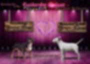 Miniature Bullterrier,Welpen,Mini Bullterrier, Bullterrier,Minibullterrier, Minibullterrier Welpen,Zuckerfee Deluxe,Dea Delfin,Bulli Welpen, MiniBulli,Minibulli Welpen