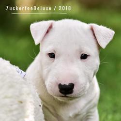 Zuckerfee Deluxe Dolly Sweet MBT