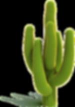 NicePng_cactus-png_284055.png