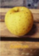 Pomme variété Goldrush