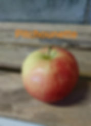 Pomme variété Pitchounette