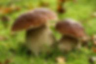 Logo producteur champignons