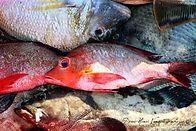 Logo producteur poisson