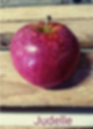 Pomme variété Judelle