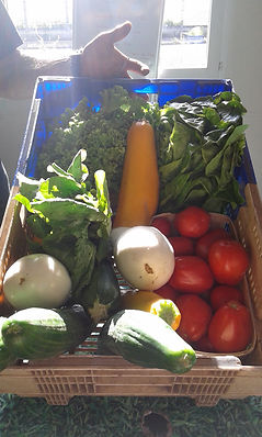 Grand panier d'été de légumes
