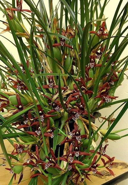 April Plant of the Month 2019