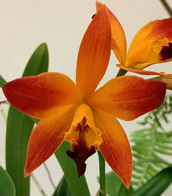 Lc.Tropical Trick