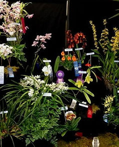 Orchid Show Displays Gallery