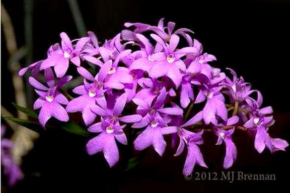 March Plant of the Month 2012