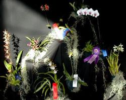 Oakwood Orchids exhibit