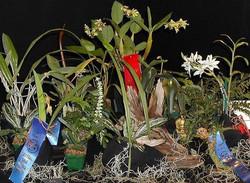 Orchid Outlet exhibit
