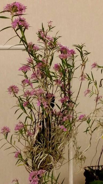 February Plant of the Month 2014