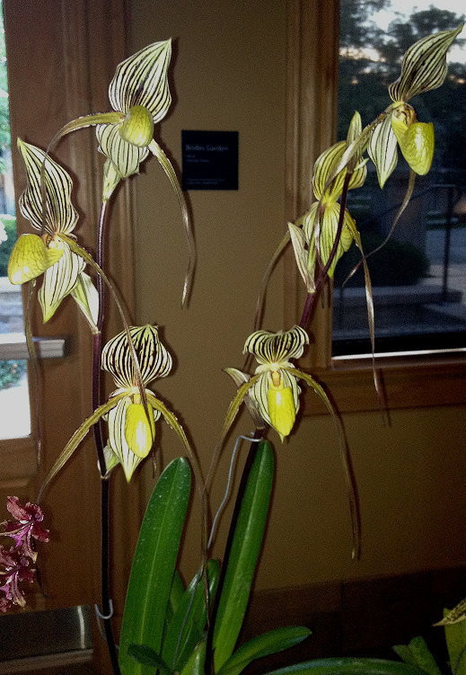 Paph.St.Swithin