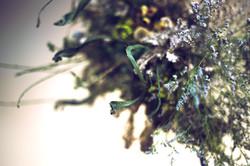 Flower's work