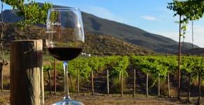 Las viñas certificadas son preferidas en el extranjero