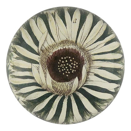 John Derian Carlina Acaulis  Decoupage Domed Paperweight