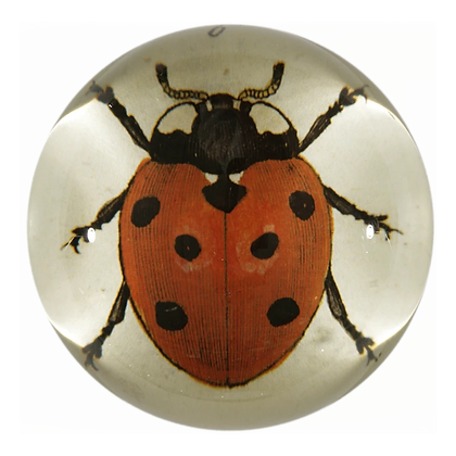 John Derian Red Lady Bug Domed Decoupage Paperweight