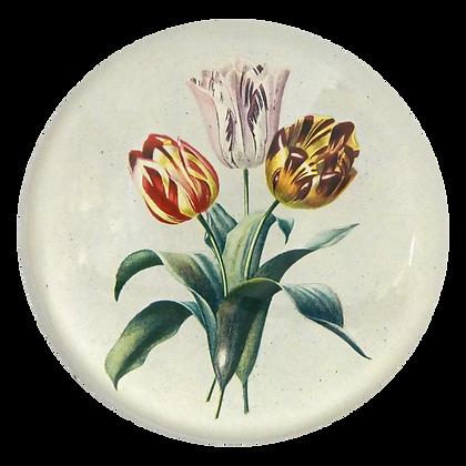 John Derian 3 Tulips Domed Decoupage Paperweight