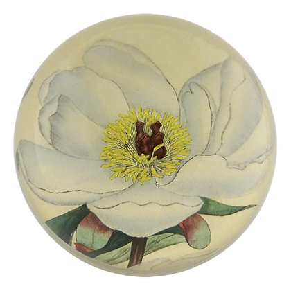 John Derian White Peony  Decoupage Domed Paperweight