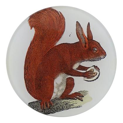 John Derian Red Squirrel Decoupage Round Dish