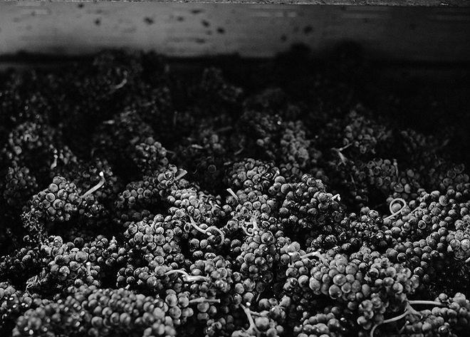 Druiven pers.jpg