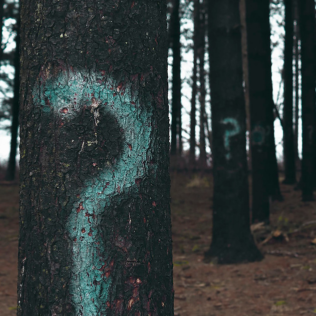 photo-trees-square.jpg