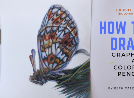 How to Draw a Butterfly in Graphite and Colored Pencil