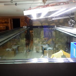 Beta Akvaryum - Akvaryum Çözümleri (262)