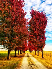 Country Road by Sue Payne.jpg