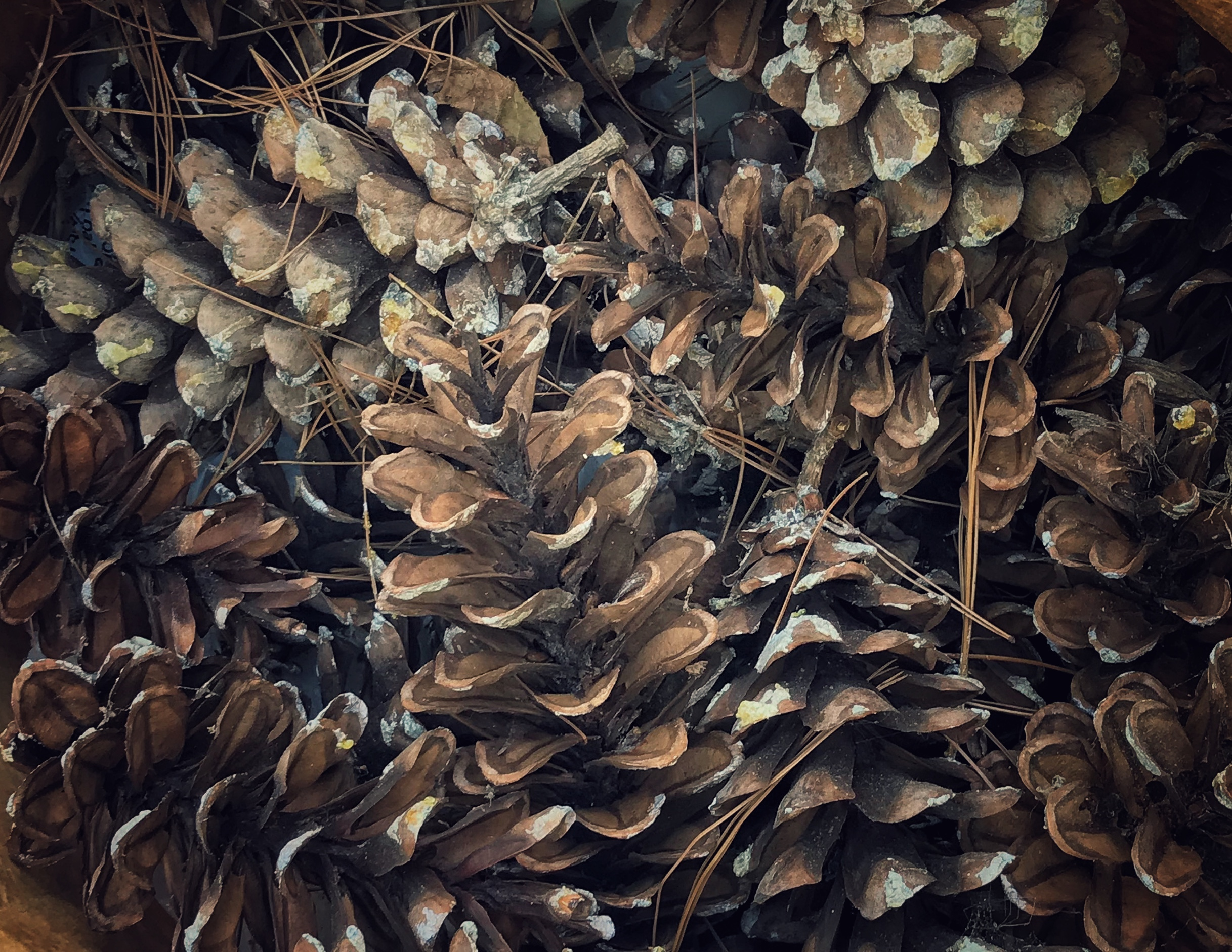 Sue Payne, Forest Floor