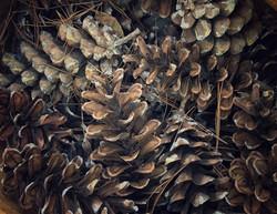 Sue Payne, Forest Floor