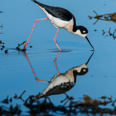 Reflection by Jackie Curts