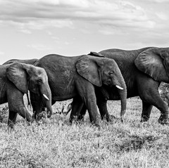 Family by Jackie Curts